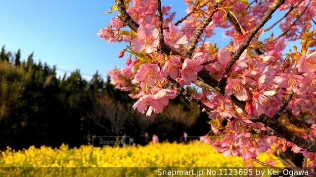 伊良湖岬の春の写真・画像素材[1123695]
