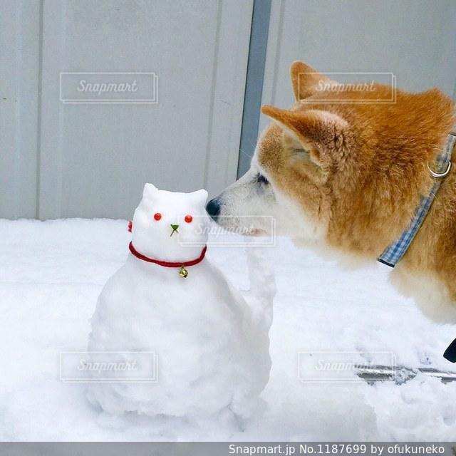 猫の雪だるまにキスする柴犬の写真・画像素材[1187699]