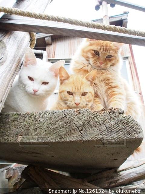 カメラを覗きこむ野良猫たちの写真・画像素材[1261324]