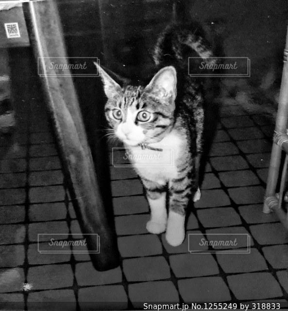 白いレンガの壁の上に座っている猫の写真・画像素材[1255249]
