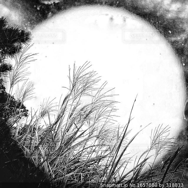 満月の写真・画像素材[1657080]