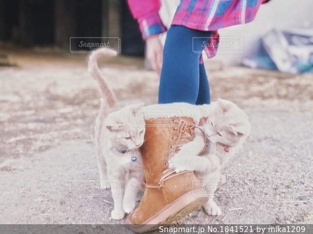 ブーツで遊ぶ子猫と少女の写真・画像素材[1841521]