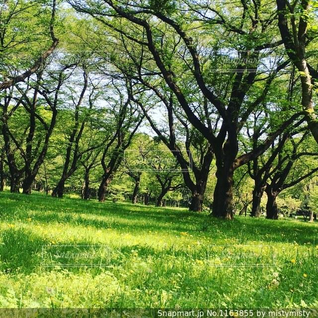 緑いっぱいの景色の写真・画像素材[1163855]