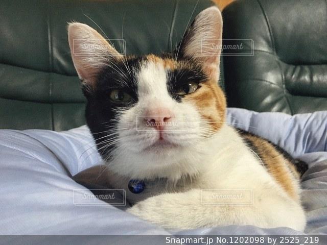 猫の写真・画像素材[1202098]
