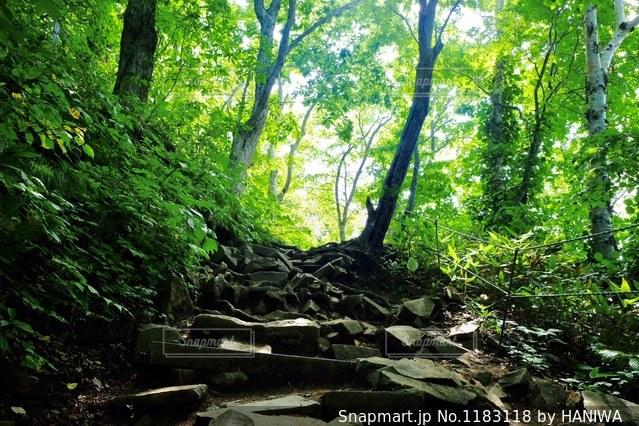 山道の木漏れ日の写真・画像素材[1183118]