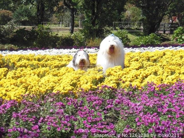 たくさんのお花が咲いてる綺麗の写真・画像素材[1261288]