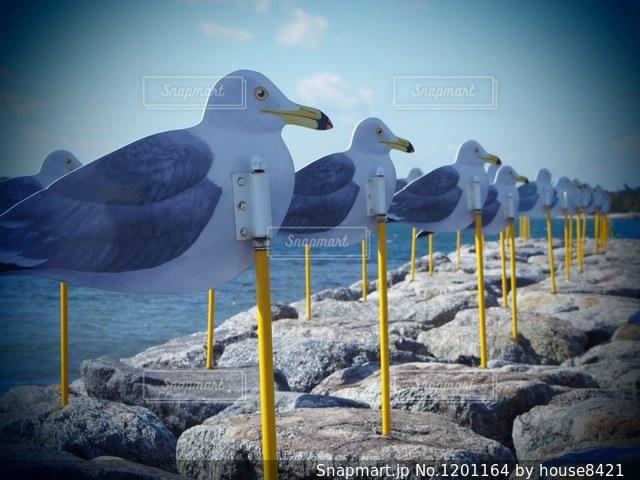 佐久島 かもめの駐車場の写真・画像素材[1201164]