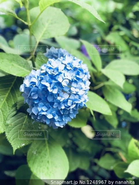 近くの緑の植物をの写真・画像素材[1248967]