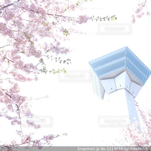 桜の写真・画像素材[1214650]
