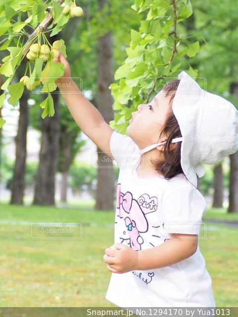 銀杏の木を真剣に観察の写真・画像素材[1294170]
