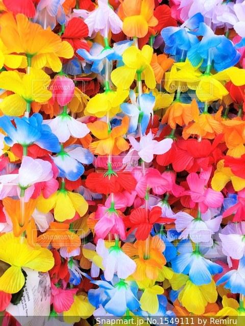 Happy Color‼︎の写真・画像素材[1549111]
