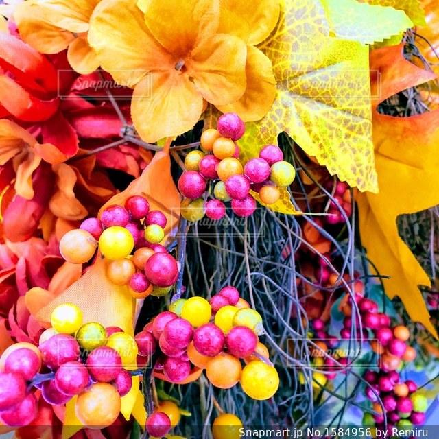 庭の秋色デコレーションの写真・画像素材[1584956]