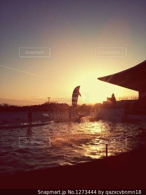 夕日とイルカの写真・画像素材[1273444]