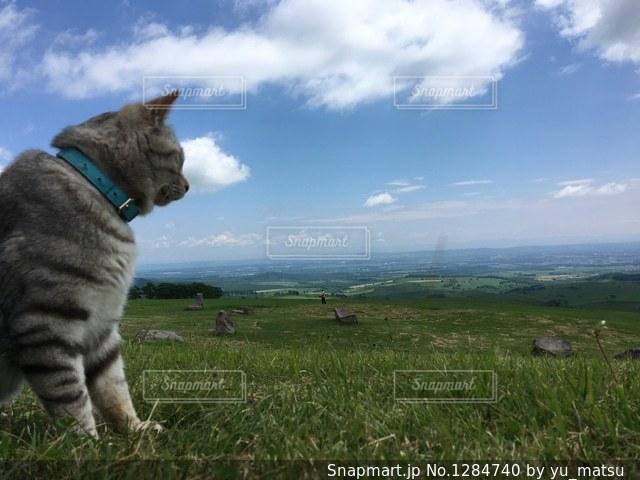 草原と猫の写真・画像素材[1284740]
