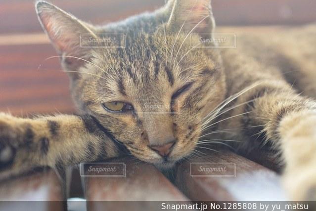 眠くてウインクの写真・画像素材[1285808]