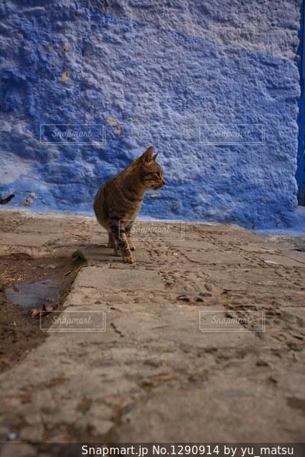 青と茶色の写真・画像素材[1290914]