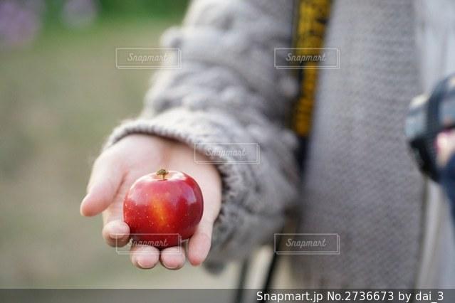 リンゴを持つ手の写真・画像素材[2736673]