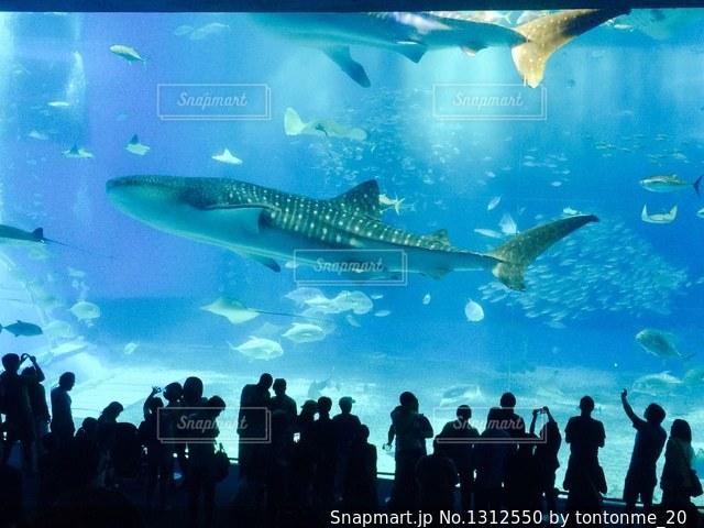 沖縄美ら海水族館と背景に人の大群衆の写真・画像素材[1312550]
