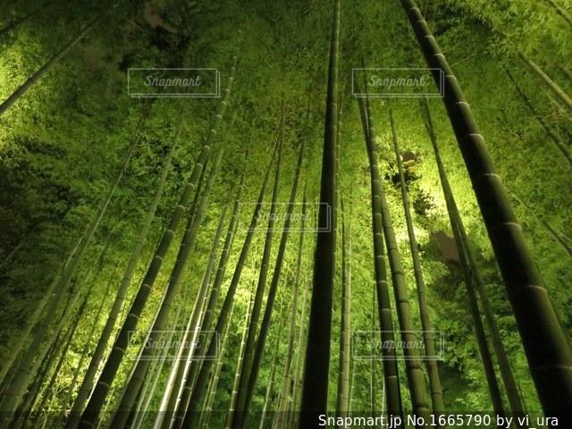 竹林散歩の写真・画像素材[1665790]