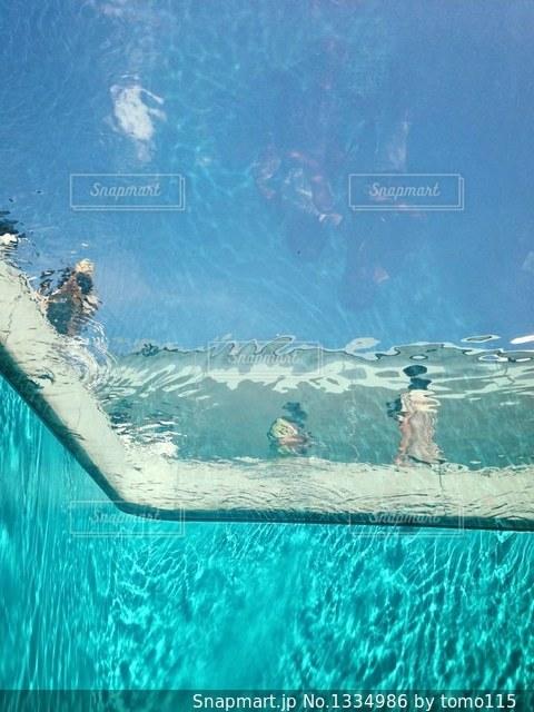 プールの中からの写真・画像素材[1334986]