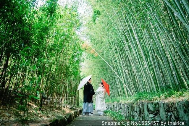 京都 竹林公園の写真・画像素材[1665457]