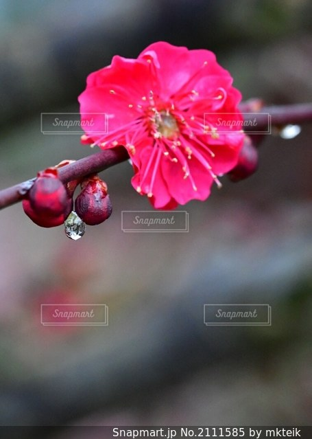 花のクローズアップの写真・画像素材[2111585]