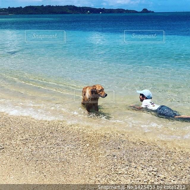 犬の写真・画像素材[1425453]