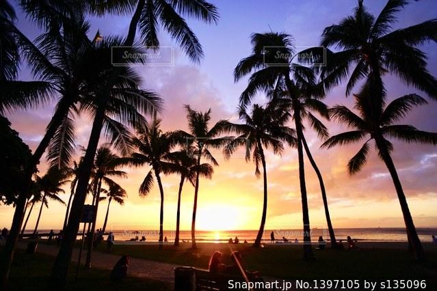 ヤシの木の横にある水の体に沈む夕日の写真・画像素材[1397105]