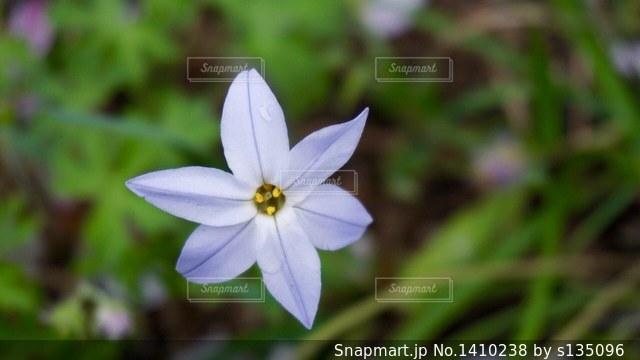 近くの花のアップの写真・画像素材[1410238]