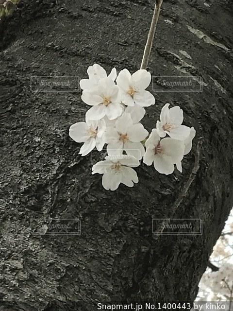 近くの花のアップの写真・画像素材[1400443]
