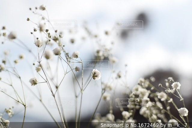 近くの花のアップの写真・画像素材[1672469]