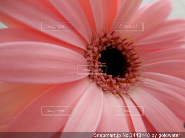 近くの花のアップの写真・画像素材[1448448]