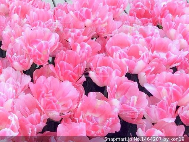 近くにピンクの花の束のアップの写真・画像素材[1464207]