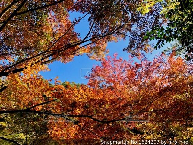 鮮やかな秋の写真・画像素材[1624207]