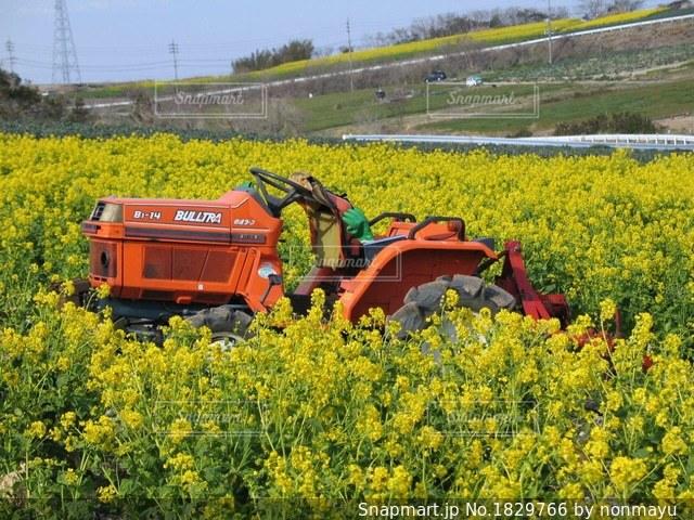 菜の花畑とオレンジ色のトラクターの写真・画像素材[1829766]
