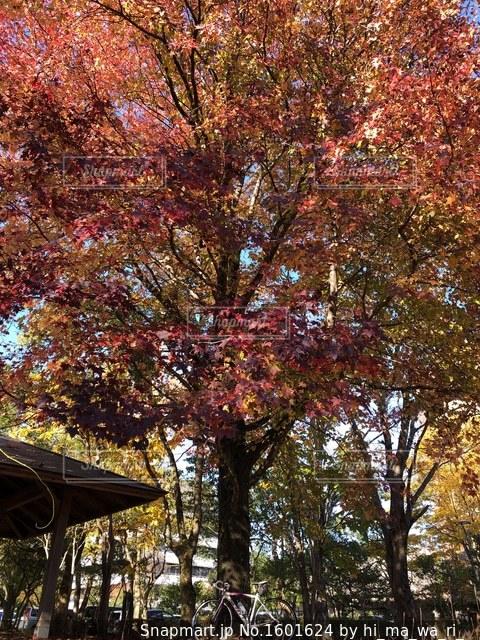 近くの木のアップの写真・画像素材[1601624]