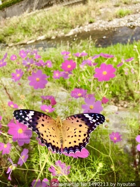 花のようにカラフルな蝶の写真・画像素材[1490213]
