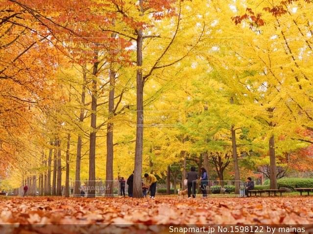 秋の写真・画像素材[1598122]