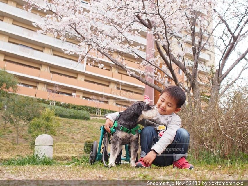 No.452413 桜