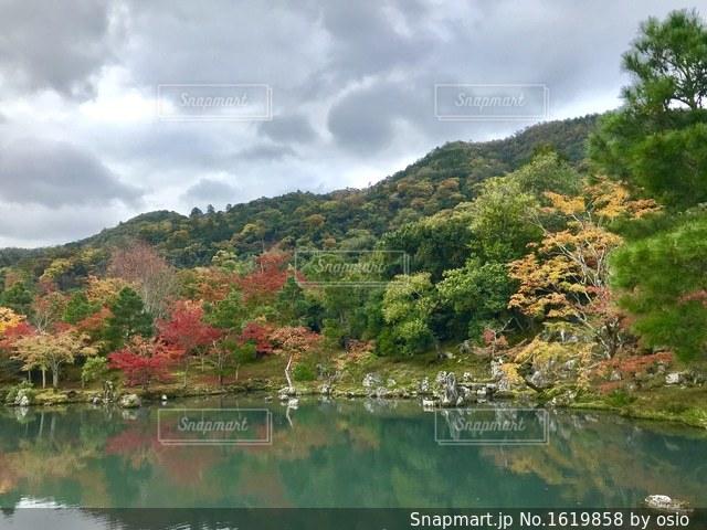 木々 に囲まれた水の体の写真・画像素材[1619858]