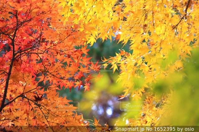 近くの木のアップの写真・画像素材[1652395]
