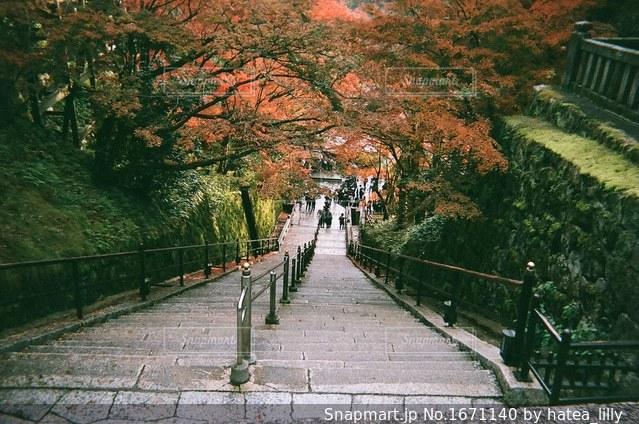 紅葉と階段。清水寺の写真・画像素材[1671140]