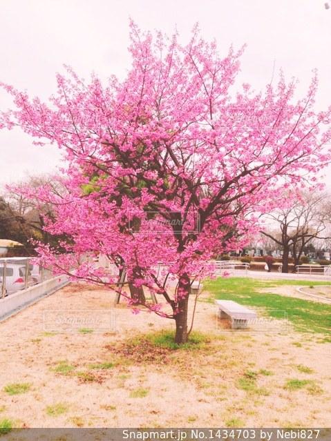 ピンクの花と草と木の写真・画像素材[1434703]