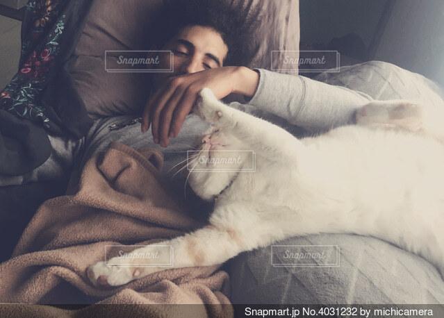 猫と戯れる昼下がりの写真・画像素材[4031232]