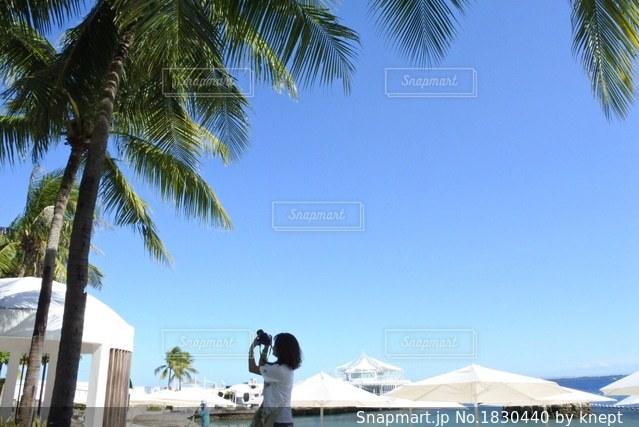 ヤシの木とビーチの人々 のグループの写真・画像素材[1830440]