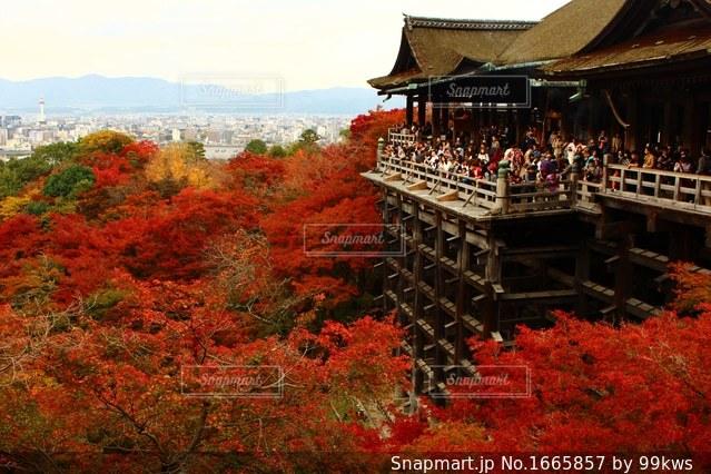 清水寺の前の大きな木の写真・画像素材[1665857]