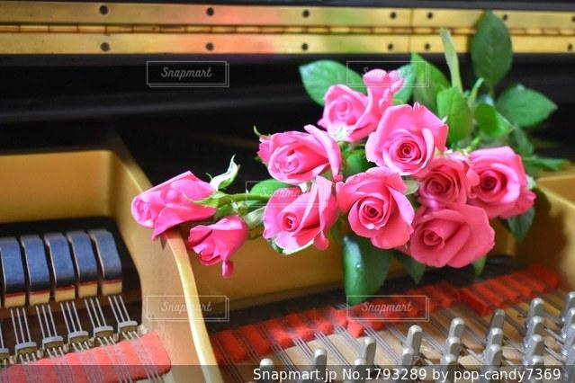 ピアノとピンクの薔薇の写真・画像素材[1793289]