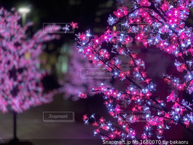 近くの花のアップの写真・画像素材[1680070]