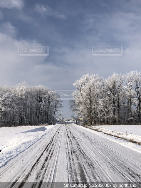 雪に覆われた畑と木を凍らせるマイナス10度の世界の写真・画像素材[2820307]