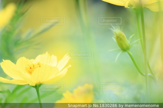 私も早くお花になりたいなぁの写真・画像素材[1830286]